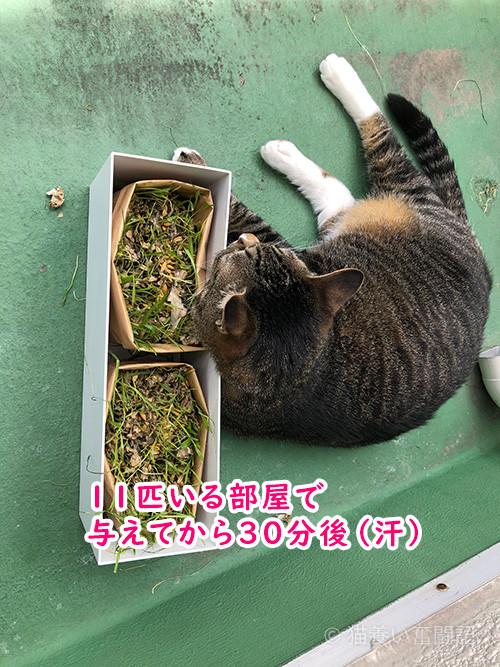 猫草がきれいに無くなりました。