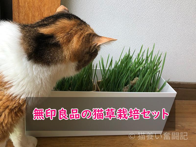 無印良品の猫草栽培セット